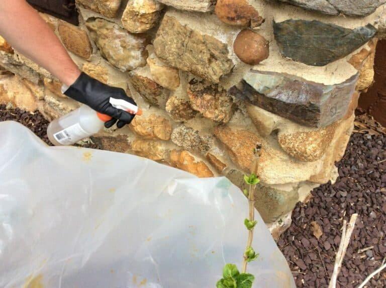 efflorescence removal